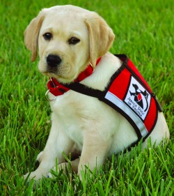 Dec 2016 GLD Meeting: Service Dogs – Learn, Meet, Share